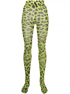 Колготки с леопардовым принтом Philipp Plein. Цвет: зеленый